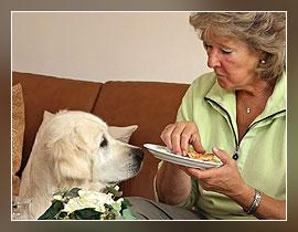 Tipp 7 Bettelnder Hund